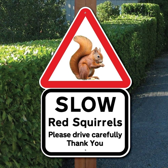 Picture of RED SQUIRREL SIGN