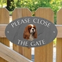 Picture of Cavalier King Charles Spaniel