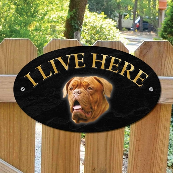 Picture of French Mastiff I Live Here Sign