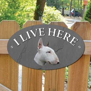 Picture of English Bull Terrier I Live Here Sign