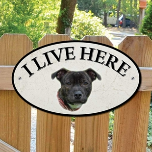 Picture of Staffordshire Bull Terrier I Live Here Sign