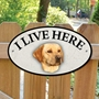 Picture of Golden Labrador I Live Here Sign