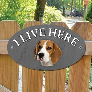 Picture of Beagle Dog I Live Here Sign