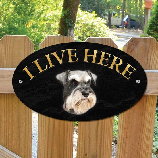 Picture of Schnauzer Dog I Live Here Sign