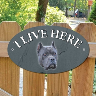 Picture of Blue Cane Corso Dog I Live Here Sign