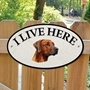 Picture of Rhodesian Ridgeback Dog I Live Here Sign