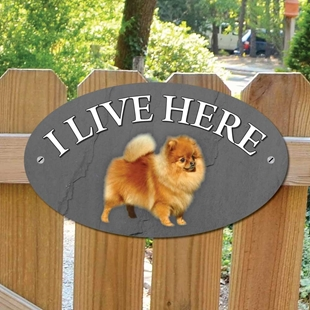 Picture of Pomeranian Dog I Live Here Sign