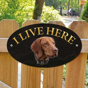 Picture of Hungarian Vizsla Dog I Live Here Sign