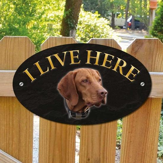 Picture of Hungarian Vizsla Dog I Live Here Sign