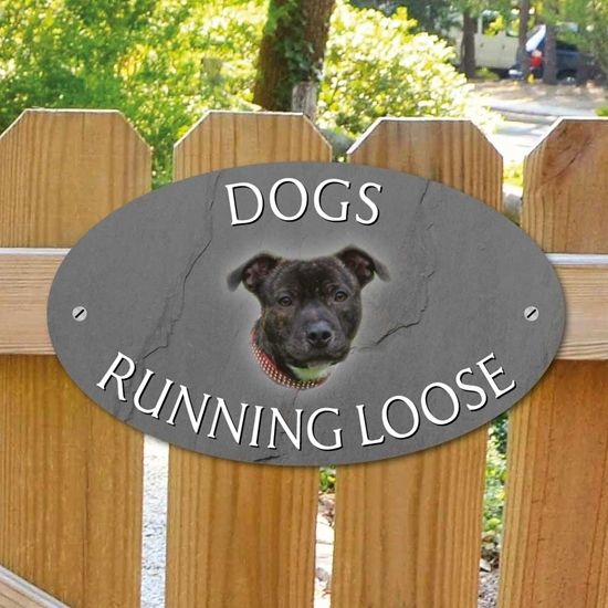 Picture of Staffordshire Bull Terrier Dogs Loose Sign