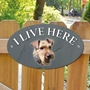 Picture of Welsh Terrier Dog I Live Here Sign